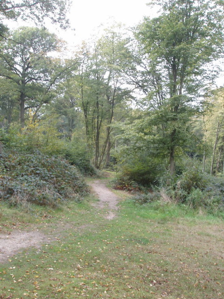 Bayhurst Woods, Greater London - Dog walks in Greater London