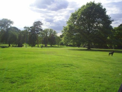 Golders Hill Park - Driving with Dogs