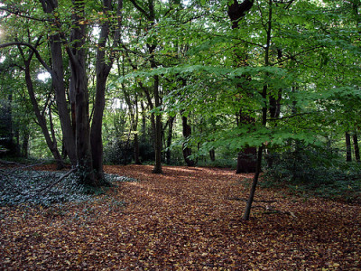 Highgate Wood local dog walk, Greater London - Driving with Dogs