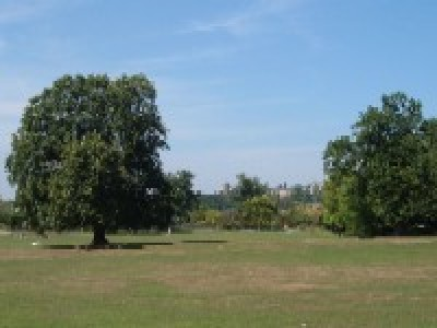 Mill Hill Park, Greater London - Driving with Dogs