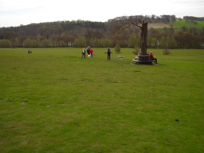 M1 Junction 38 dog walk and cafe, Yorkshire - Driving with Dogs