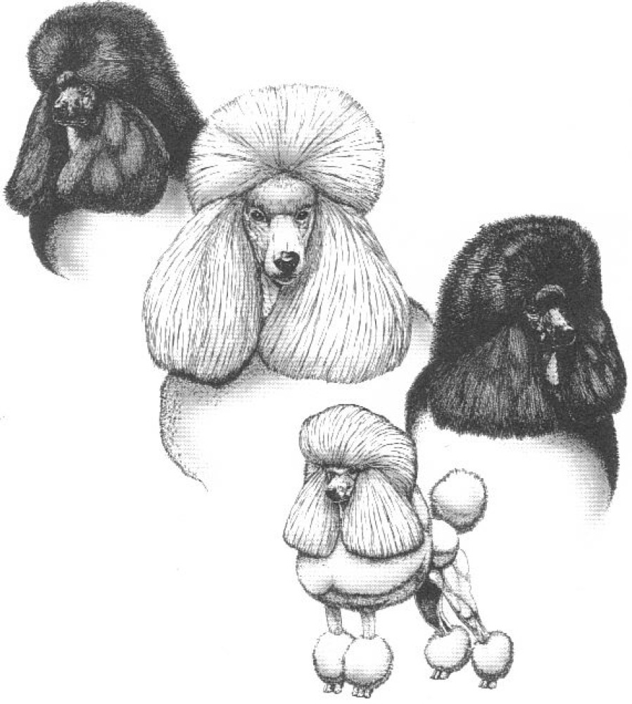 Leicester Academy Dog Grooming, Leicestershire - Image 1