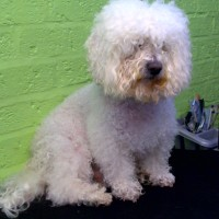 Leicester Academy Dog Grooming, Leicestershire - Image 2