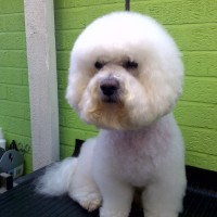 Leicester Academy Dog Grooming, Leicestershire - Image 3