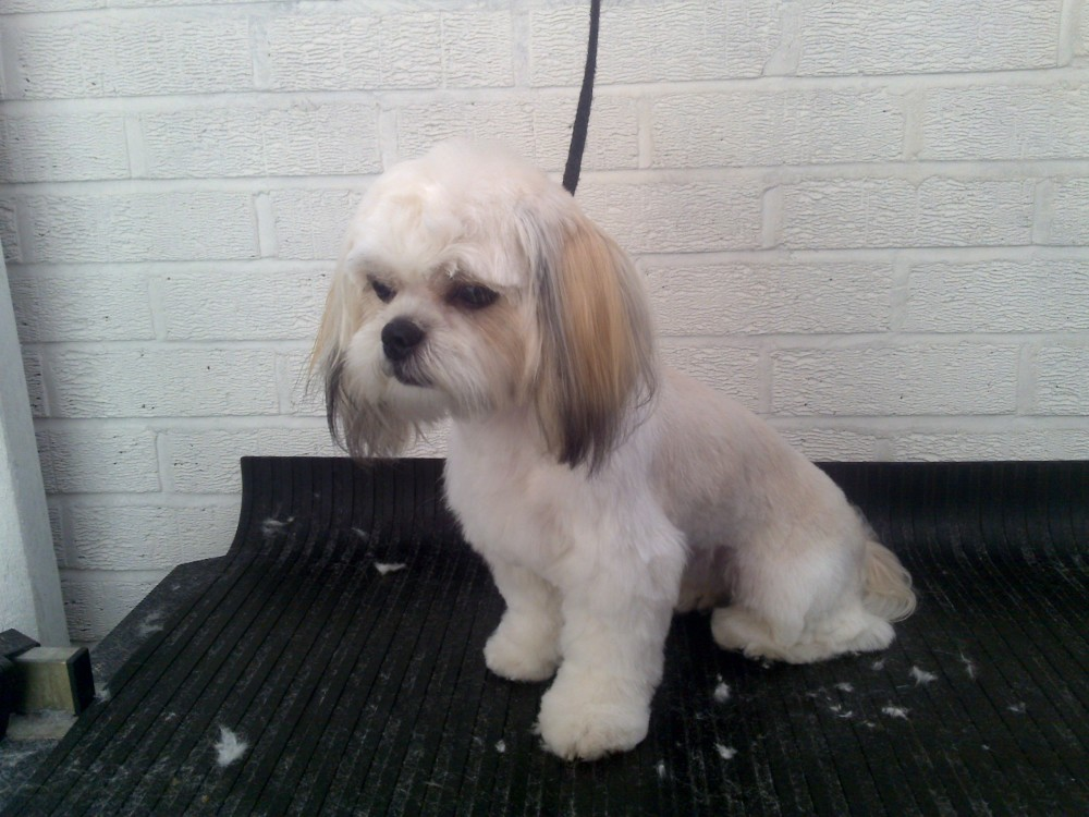 Leicester Academy Dog Grooming, Leicestershire - Image 4