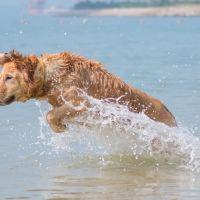Keep your dog safe and well on the beach 2021.jpg
