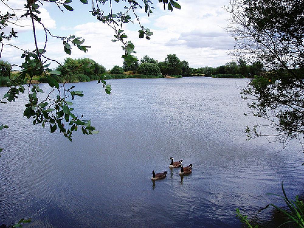Eastbrookend Park dog walk, Essex - Dog walks in Essex