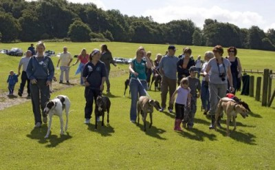 Hainault Forest dog walks, Essex - Driving with Dogs