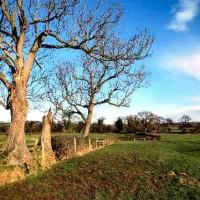 Markeaton Park dog walks, Derbyshire - Dog walks in Derbyshire