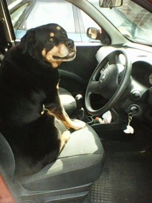jlester - Driving with Dogs