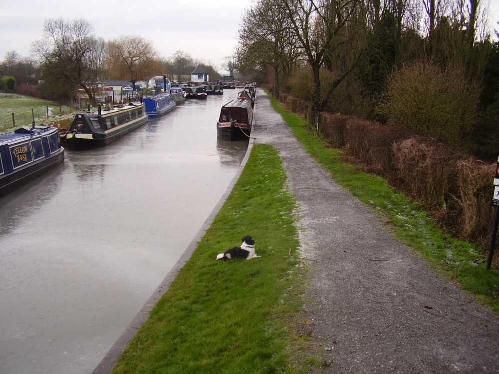 Quiet canalside dog walk with dog-friendly pub and cafe, Warwickshire - Dog walks in Warwickshire
