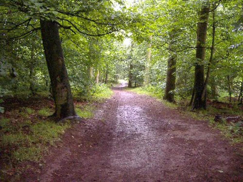 A7 dog walk near Gorebridge, Scotland - Dog walks in Scotland