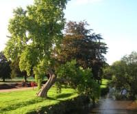 Trentham Gardens and park, Staffordshire - Dog walks in Staffordshire