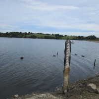 Reservoir dog walk, Leicestershire - Dog walks in Leicestershire