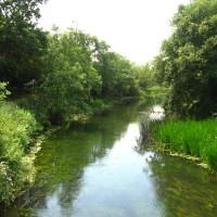 Dinton Pastures, Berkshire