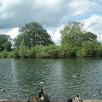 Dinton Pastures, Berkshire - Dog walks in Berkshire