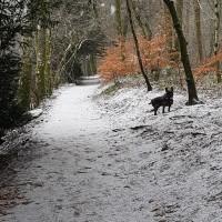 The Hermitage woodland walk, Scotland - 20190201_141951.jpg