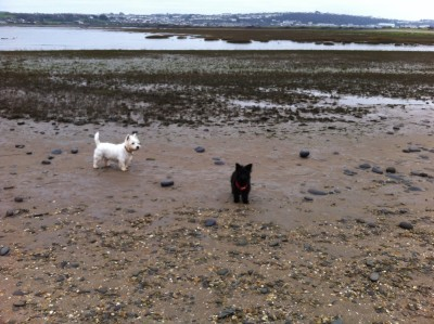 Dog Friendly Beach near Bideford, Devon - Driving with Dogs