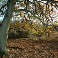 Yateley Common Country Park dog walks, Hampshire - Dog walks in Hampshire