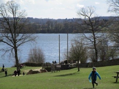 A21 country park and cafe dog walk, East Sussex - Driving with Dogs
