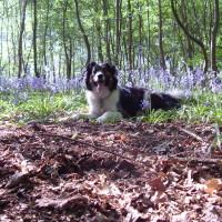 Woodland dog walk near Claygate, Kent - Dog walks in Kent