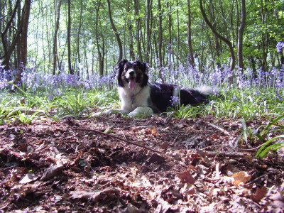 Woodland dog walk near Claygate, Kent - Driving with Dogs