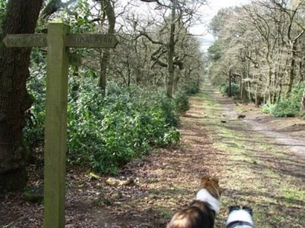 Biddulph Grange dog walk, Staffordshire - Dog walks in Staffordshire