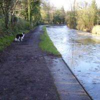 M40 Junction 16 dog-friendly pub and dog walk, Warwickshire - Dog walks in Warwickshire