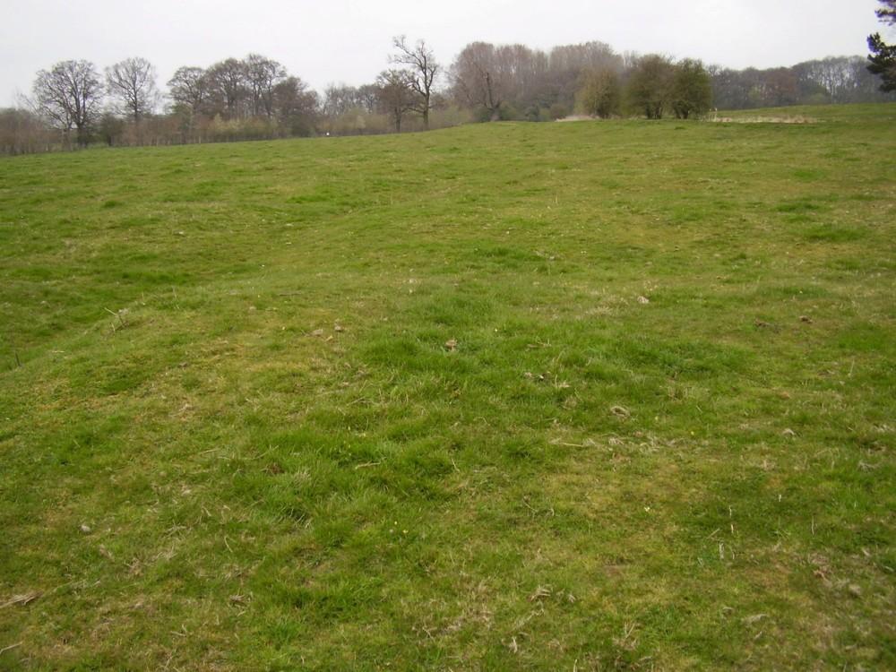 M6 Junction 1 nature reserve dog walk, Warwickshire - Dog walks in Warwickshire