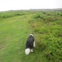 Dog walk on the Welsh border, Shropshire - Shropshire dog walks.JPG
