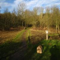 Greenford local dog walk, Greater London - Dog walks in Greater London