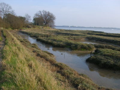 Riverside dog walks and dog-friendly pub, Essex - Driving with Dogs