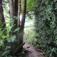 Peaceful woodland dog walk, Oxfordshire - Oxfordshire dog walks.JPG
