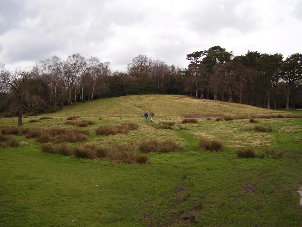 M6 Junction 5 or 7 dog walk, Sutton Coldfield, West Midlands - Dog walks in the West Midlands