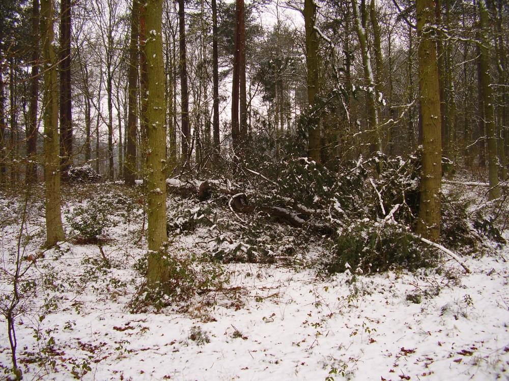 Dog walk in woods near Ledbury, Herefordshire - Dog walks in Herefordshire
