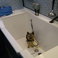 Dial a Dog Wash, Fife, Scotland - Scotland dog service