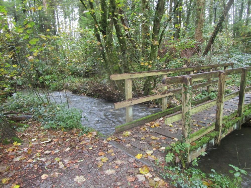 Woodland dog walk near Aberystwyth, Wales - IMG_5957.JPG