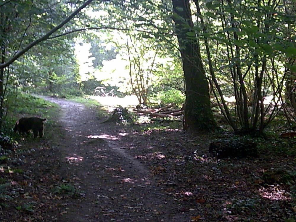 Firestone Copse dog walk, Isle of Wight - Dog walks on the Isle of Wight