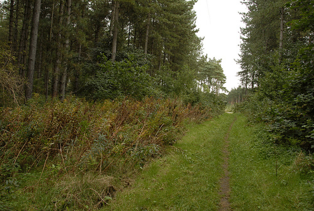 Willingham Woods dog walk near Market Rasen, Lincolnshire - Dog walks in Lincolnshire