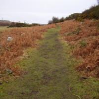 A1 Historic Castle dog walk, Northumberland - Dog walks in Northumberland