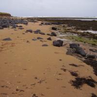 Boulmer dog walk and dog-friendly beach, Northumberland - Dog walks in Northumberland