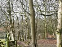 Greenham & Crookham Commons dog walks, Berkshire - Berkshire dog walk