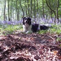 Forest dog walk near Downpatrick, NI - Dog walks in Northern Ireland