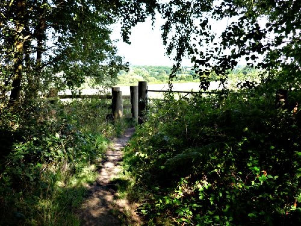 A444 Arley Woods dog walk, Warwickshire - Dog walks in Warwickshire