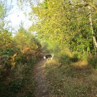 West Blean and Thornden Wood dog walks, Kent - Kent dog-friendly dog walk and dog-friendly pub