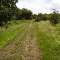 M6 Junction 12 dog walk, Staffordshire
