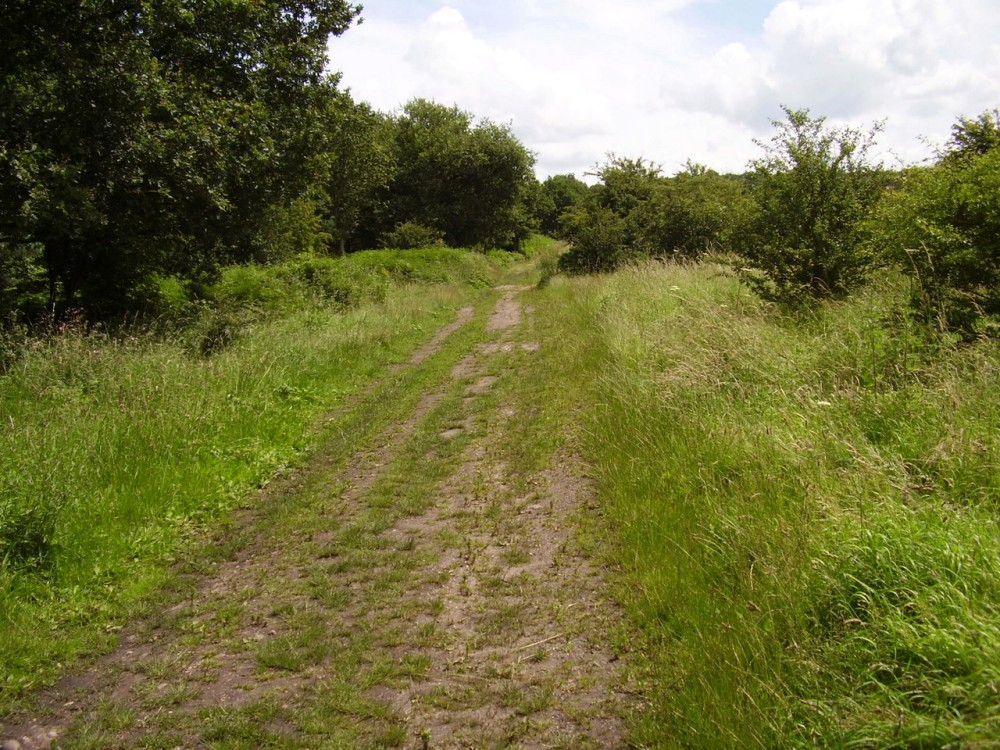 M6 Junction 12 dog walk, Staffordshire - Dog walks in Staffordshire