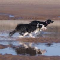 A92 dog-friendly beach near Montrose, Scotland - Dog walks in Scotland