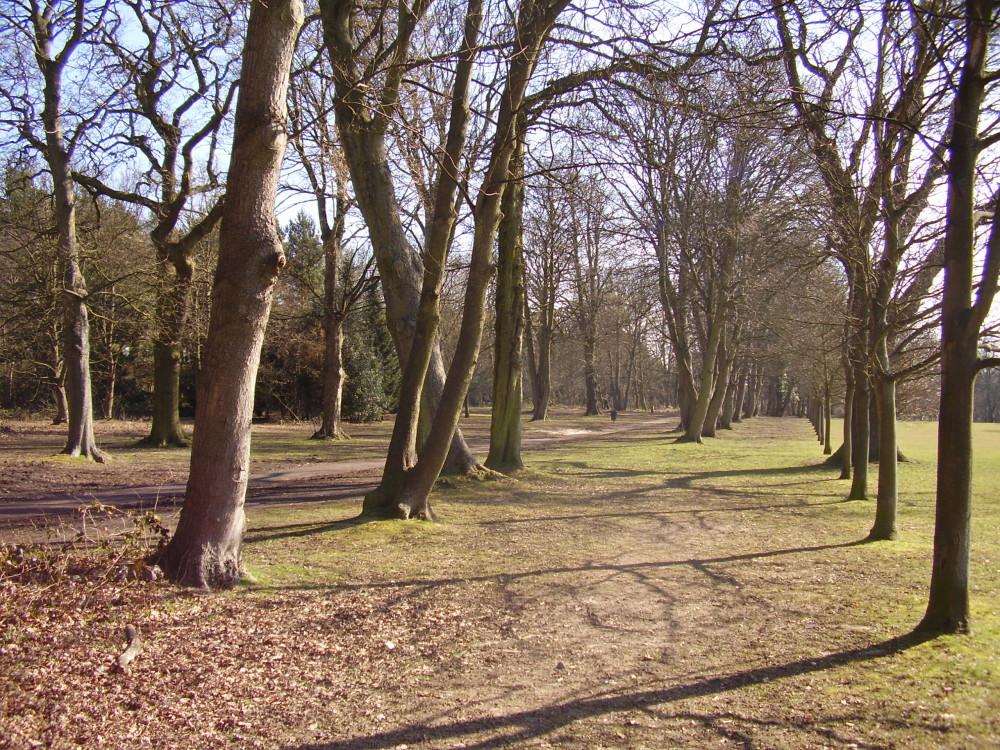 Dorridge Wood local dog walk, West Midlands - Dog walks in the West Midlands