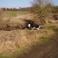 Sheldon Park dog walk, West Midlands - Dog walks in the West Midlands